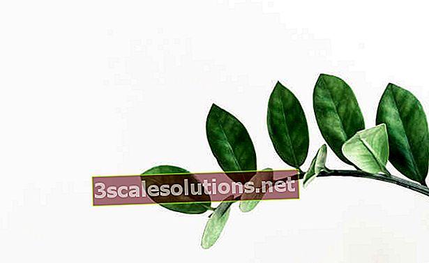Incontra undici tipi di piante da ombra