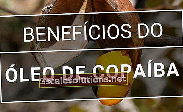 Olio di Copaiba: a cosa serve e vantaggi