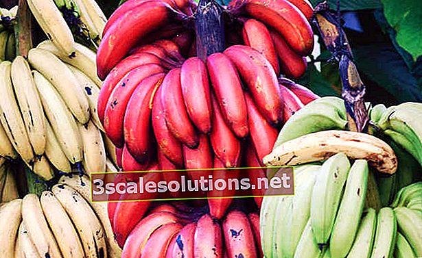 Banane: 11 incredibili benefici