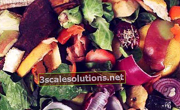 Cosa sono i rifiuti organici e come riciclarli a casa