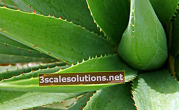 Aloe: benefici per pelle, capelli e altro