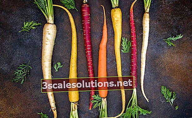 Benefici della carota