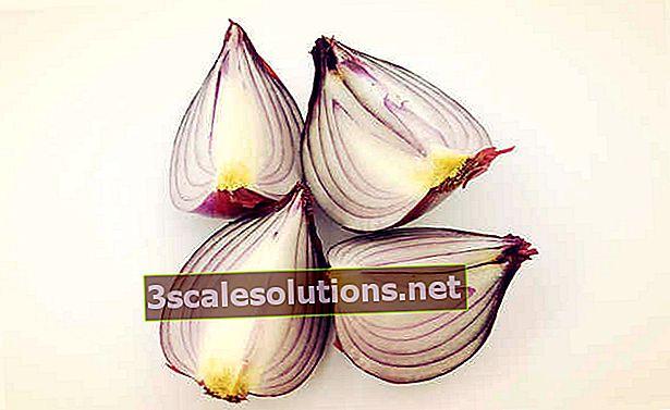 Sette benefici della cipolla cruda e cotta