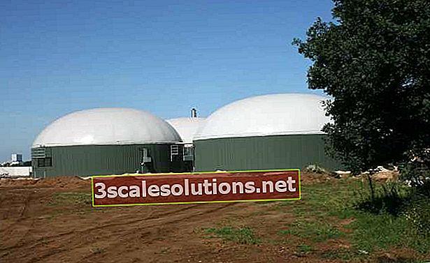 Biogas: cos'è e come si trasforma in energia