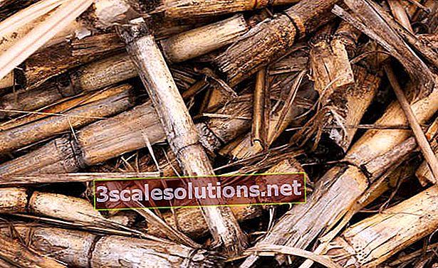 Cos'è la biomassa? Conosci vantaggi e svantaggi