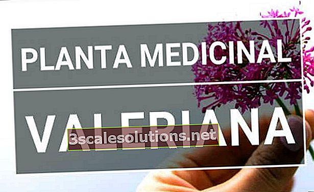 Valeriana: a cosa serve, indicazioni ed effetti collaterali