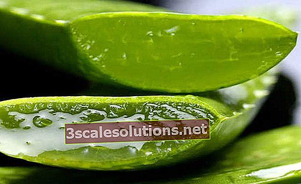 Aloe vera: aloe vera eelised, kuidas seda kasutada ja milleks see on mõeldud