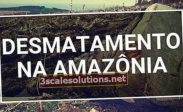 Deforestazione in Amazzonia: cause e come combatterla