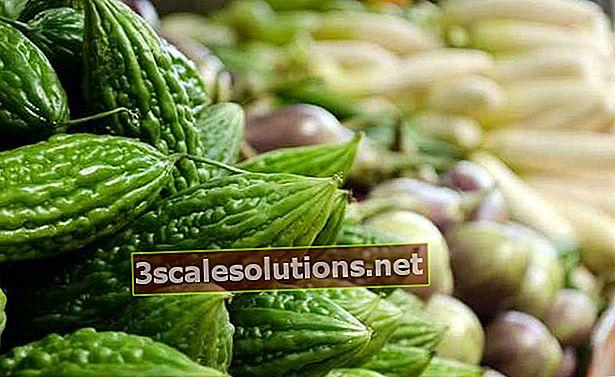 Melone Caetano: la pianta ha un potenziale farmaceutico