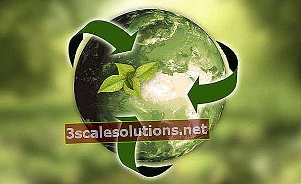 Cos'è la sostenibilità: concetti, definizioni ed esempi