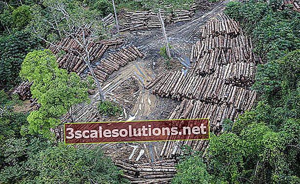 Cos'è la deforestazione?